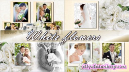 White flowers - project for ProShow Producer