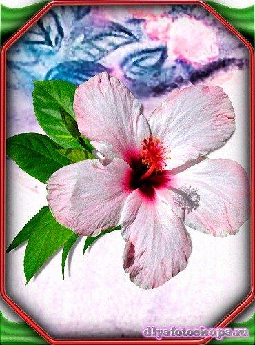 Png для фотошоп - Красивые гибикусы